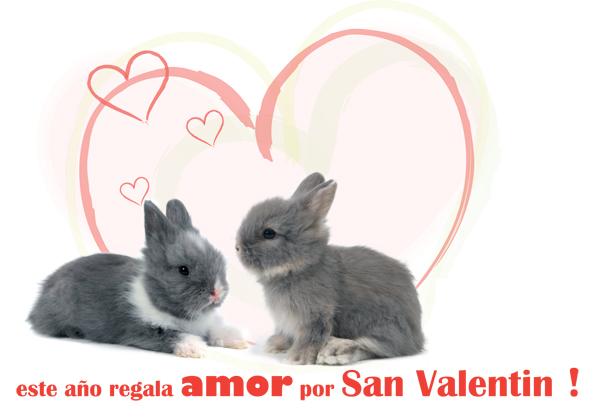 Conejos San Valentín