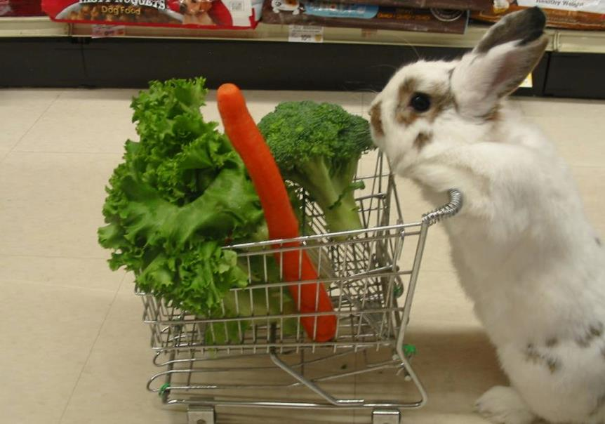 Zanahoria Para Conejo Enano Conejo con zanahoria para colorear. zanahoria para conejo enano