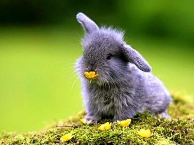 conejo heno2